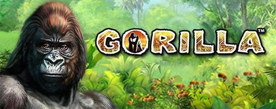 Slot Gorilla Novomatic