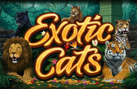 slot gratis exotic cats